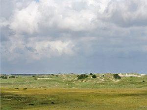 Typischer Dünenbereich auf Norderney. Foto: N.Oberdiek