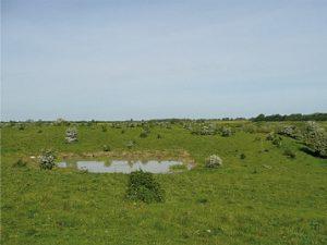 """""""Wilde Weide"""" auf Mineralboden mit aufkommenden Gehölzen und künstlich geschaffenem Kleingewässer. Foto: M. Ruf"""