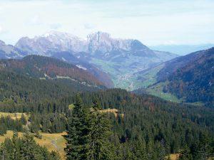 Voralpine Flyschgebiete bieten optimale Voraussetzungen für die Förderung des Auerhuhns in den Alpen. Foto: K.Bollmann