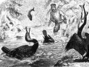 Joseph Wolf: Kormoranfischerei, in Salvin & Freeman (1859)