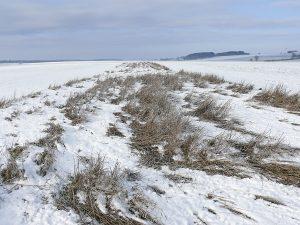 winterweizen-r-joest