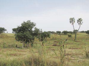 Landscape in the Sahel near Mainé-Soroa, SE Niger, 3rd October 2010. Copyright David Kusserow. – Landschaft in der Sahelzone nahe Mainé-Soroa, Süd-Ost Niger, 3. Oktober 2010.